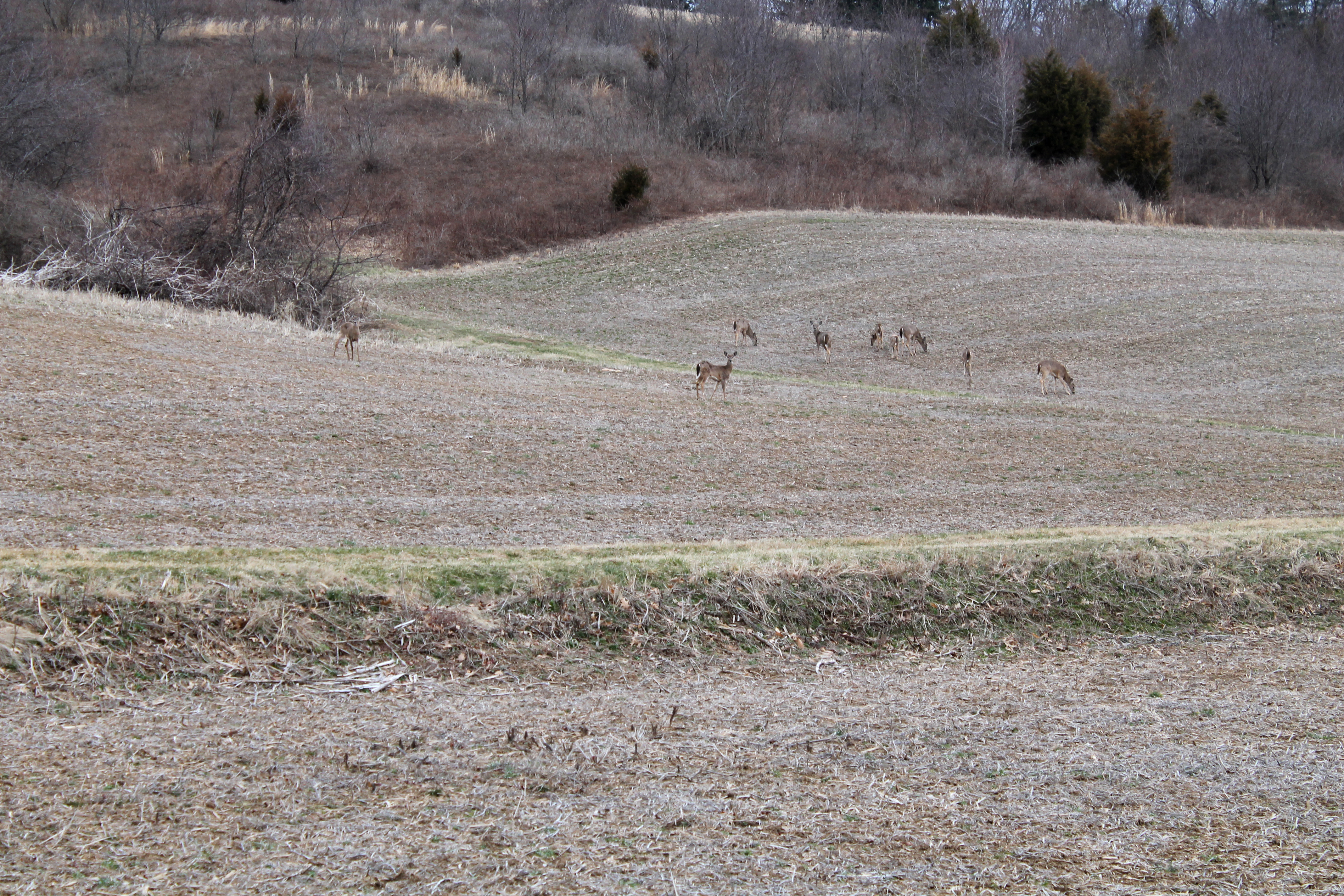 Deer in field | Work in Progress Wednesday: Photo Editing | Making the Most Blog